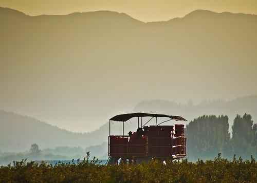 09-02-14 Raspberry Harvest