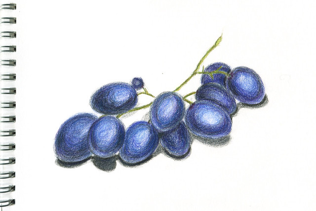 drawing. grapes. colored pencils