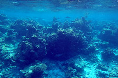 Beneath the surface, Maldives, Indian Ocean