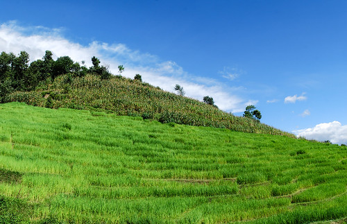 autumn day ricefield lovelyweather terracefarming banepa pwpartlycloudy popcornterrace