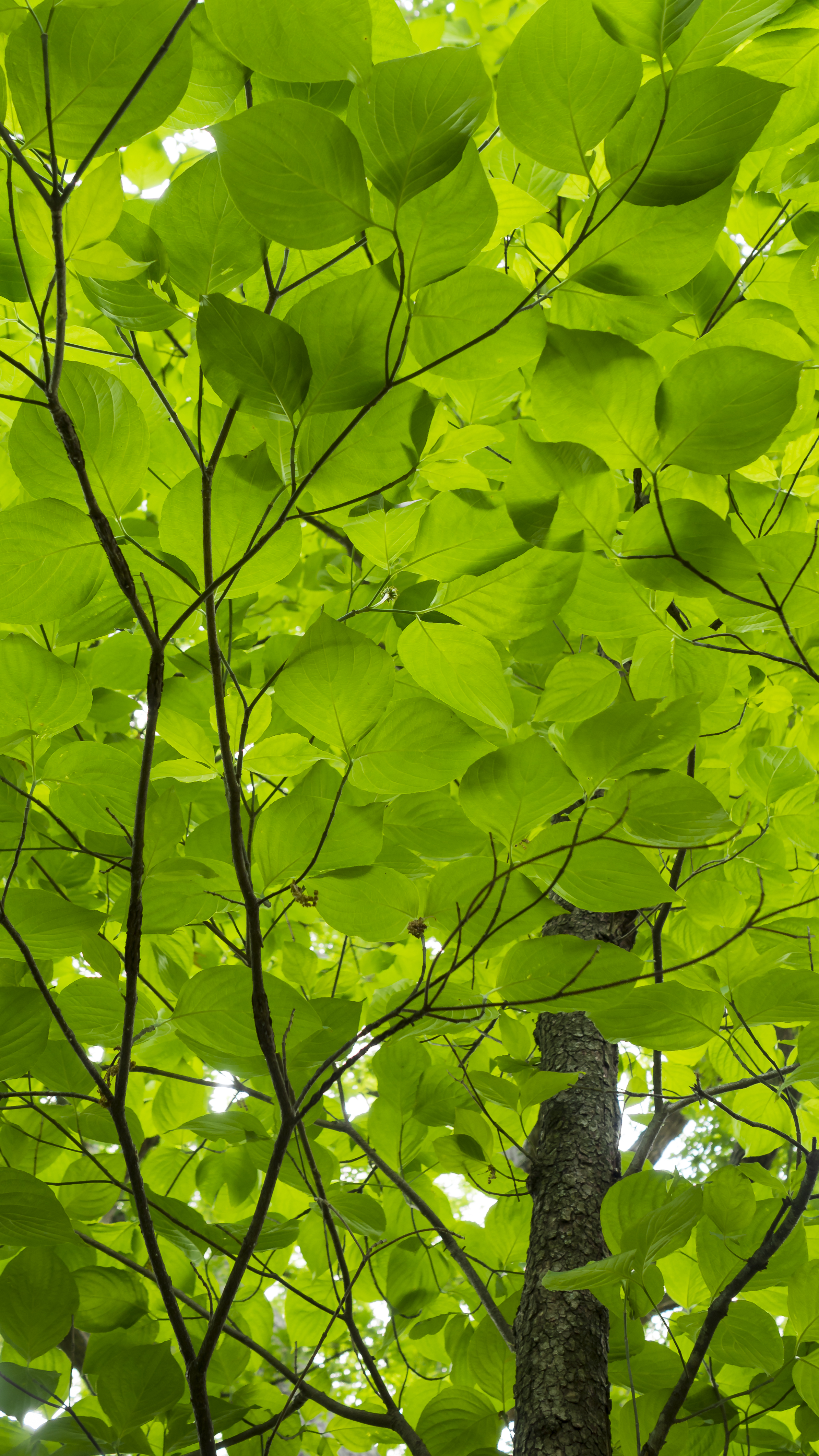 Forest Canopy Paint Color