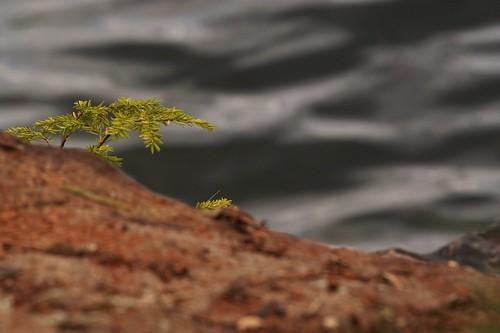 park trees ontario canada tree water rock landscape moss scenic provincialpark provincial murphyspoint