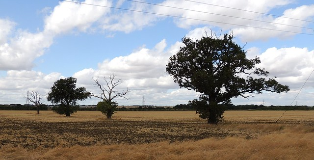 Trees and fields, Sandy Bedfordshire