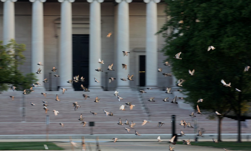DC Birds in flight