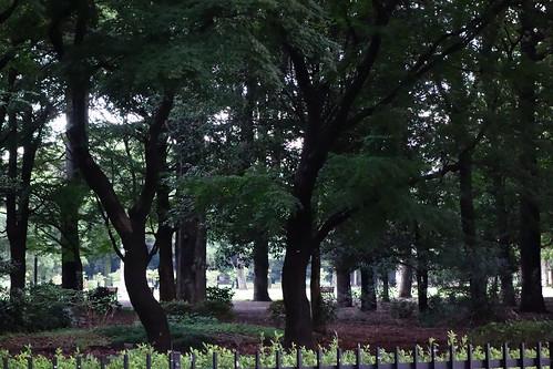 デング熱により閉鎖された代々木公園