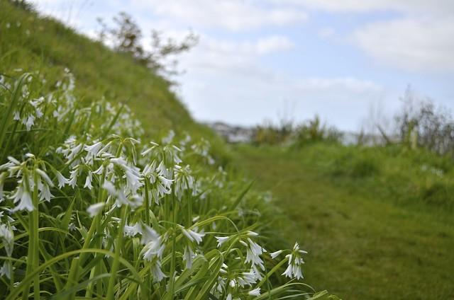 White flowers | Mt Victoria