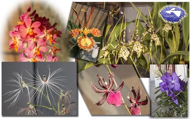 II Encuentro de aficionados a las orquídeas del País Vasco - Collage