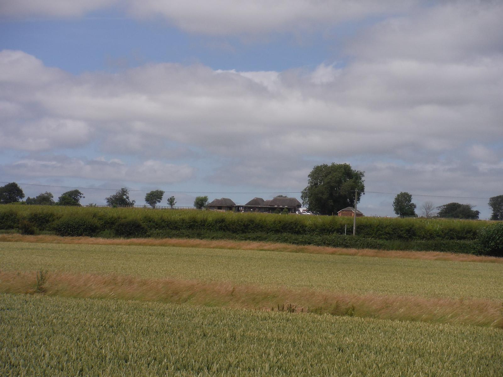 Bignor Roman Villa across a field and a road SWC Walk 217 Midhurst Way: Arundel to Midhurst