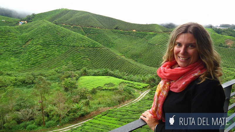 Cameron Highlands Malasia (1)