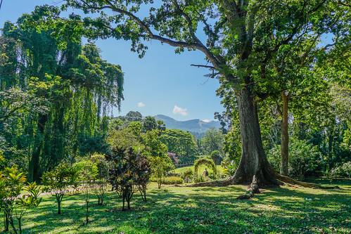 botanicgarden kandy srilanka peradeniya
