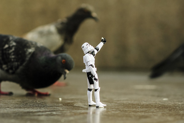 There are not the  pigeons that you are looking for
