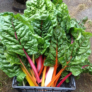 Anyone want some rainbow chard? I just harvested 6kg! #nofilter