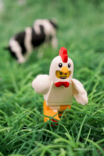Lego in chicken suit running from a cow