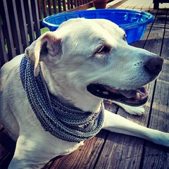 I love my model! #airysummerinfinityscarf is finally off the needles! #Cascade #UltraPima #infinityscarf #dogstagram #handknit #happydog #love #smile