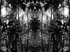tropical psychedelia in black and white