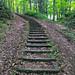 Hiking path by Jess. B.