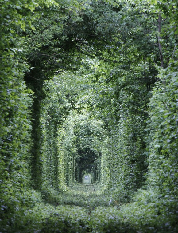 274010-unused-railway-track-in-ukraine-forms-into-tunnel-of-love