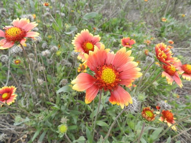 todayflowersDSCN4672