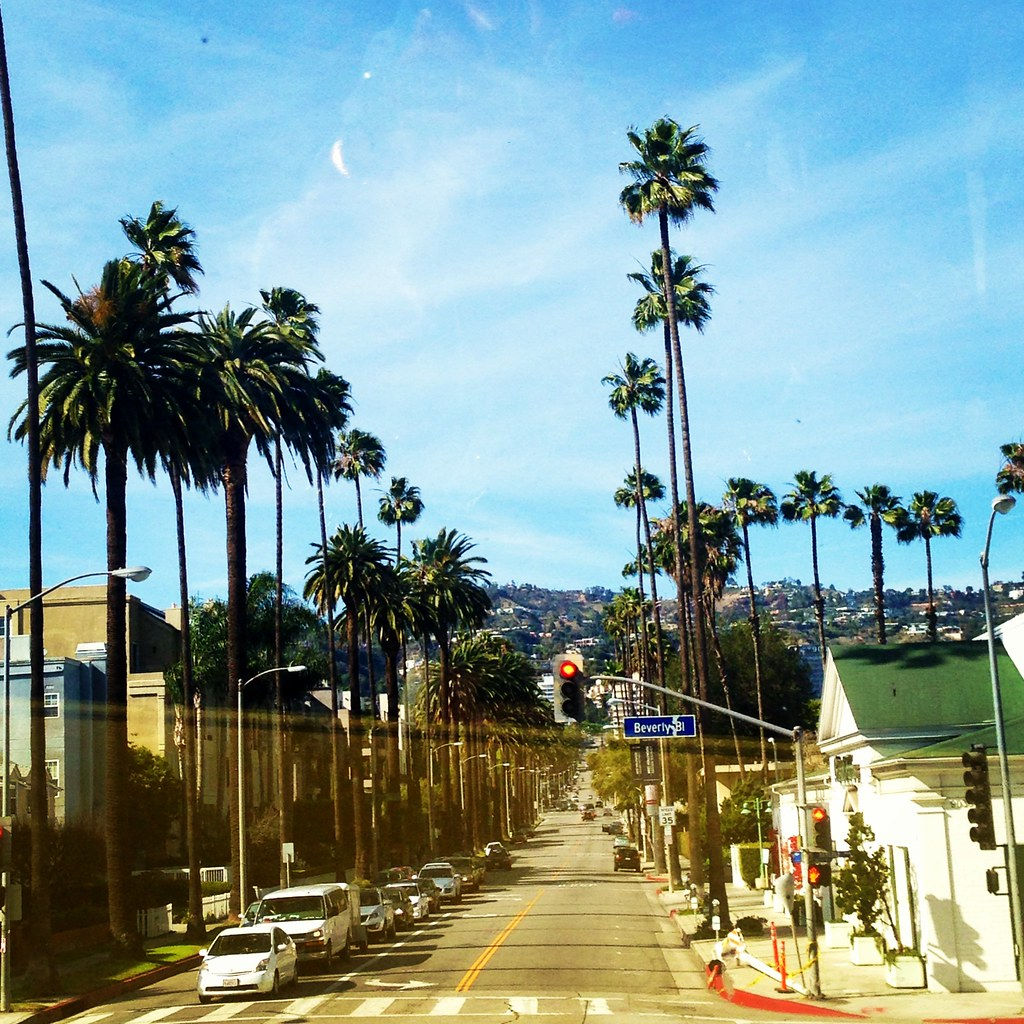 Los angeles, palm trees,