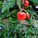 garden 084