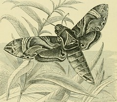 "Image from page 133 of ""The transformations (or metamorphoses) of insects (Insecta, Myriapoda, Arachnida, and Crustacea) : being an adaptation, for English readers, of M. Émile Blanchard's ""Metamorphoses, moeurs et instincts des insects;"" and a compilatio"