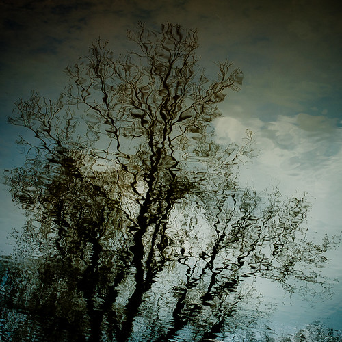 trees sky abstract reflection water silhouette clouds forest square landscape spring pond woods nikon natural d5000 noahbw