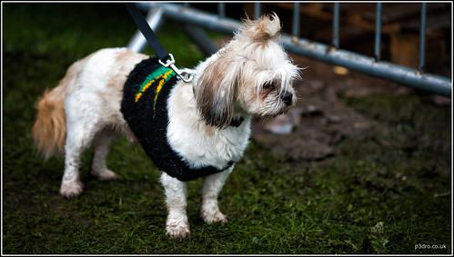 Jamaica Dog