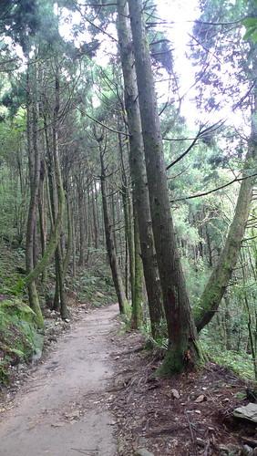 20140809-橫嶺山步道 (15)