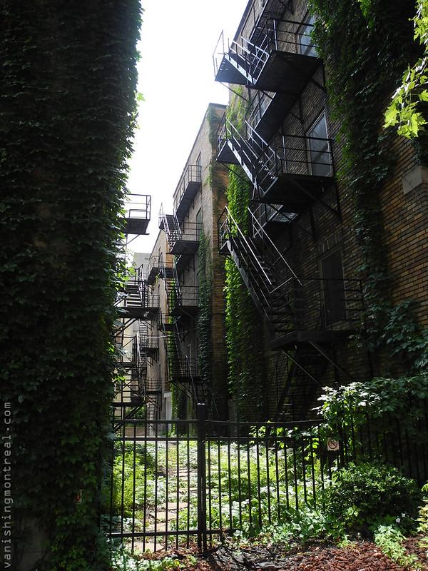du Fort green 2