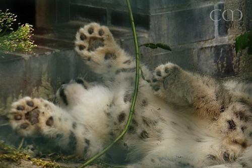 Cute!! Paws!!!