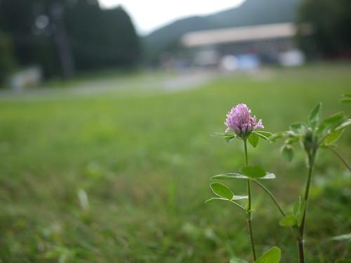 龍岩祭20140823_05