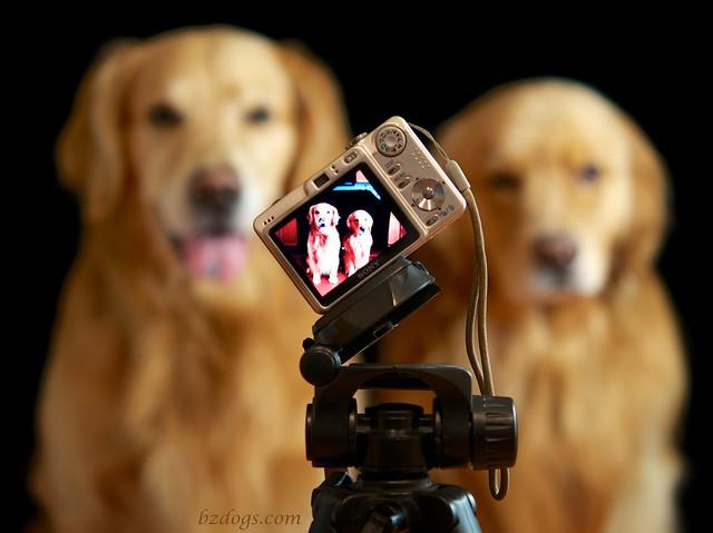 Photo Shoot of a Photo Shoot?