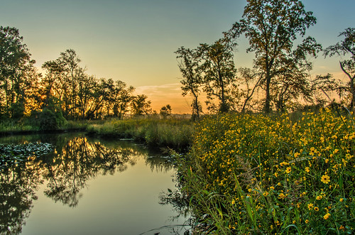 Swamp Sunrise by Geoff Livingston
