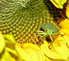Insects and Macro