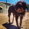 Joe #viralata #cachorro #dog #serranegra #saopaulo