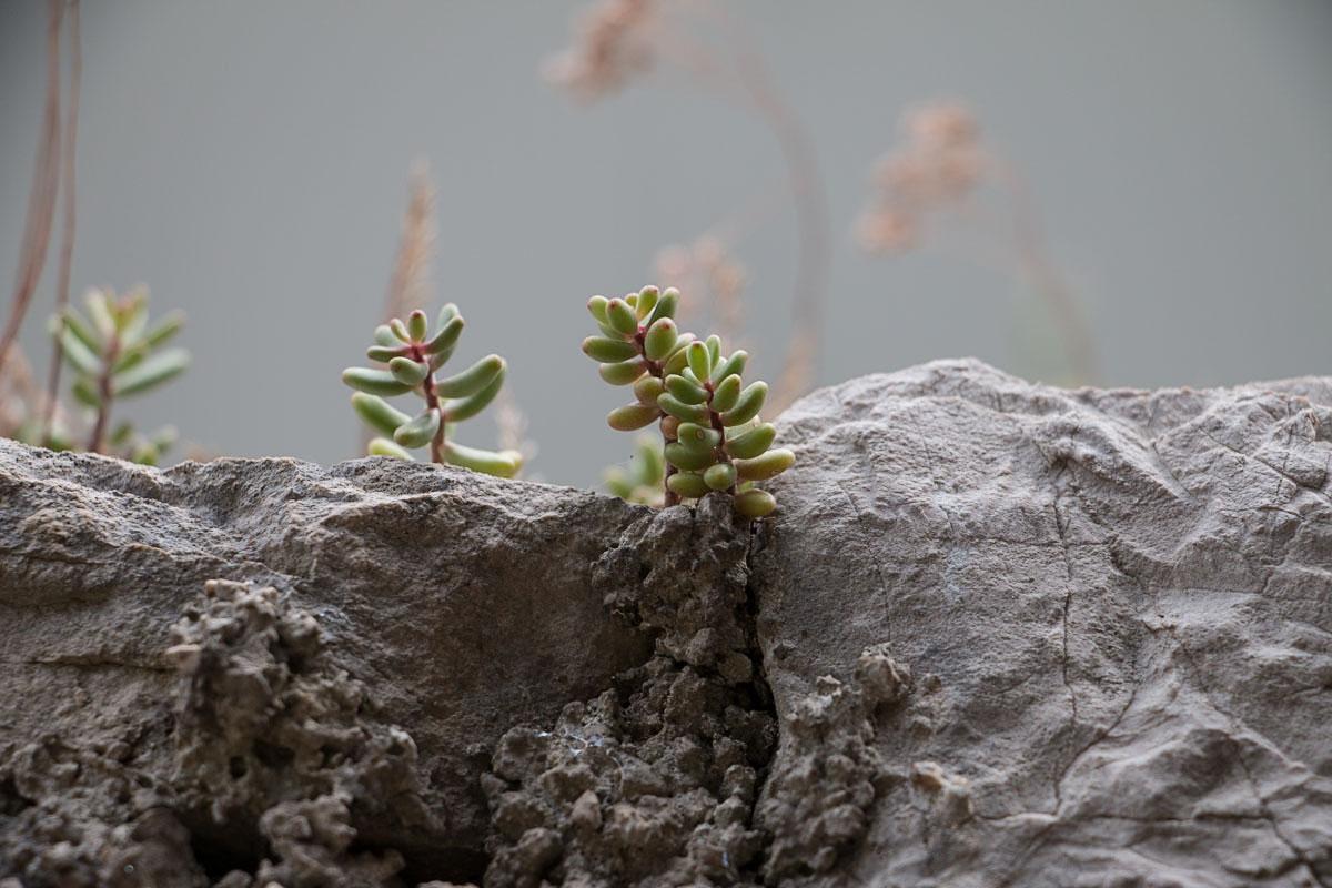silba 2014   lili weissensteiner
