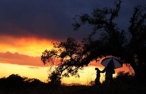 Sunset Umbrella