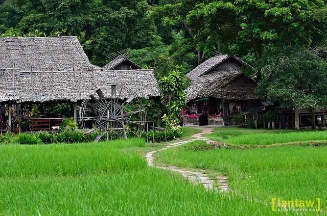 Rice Paddies - Baan Tong Luang