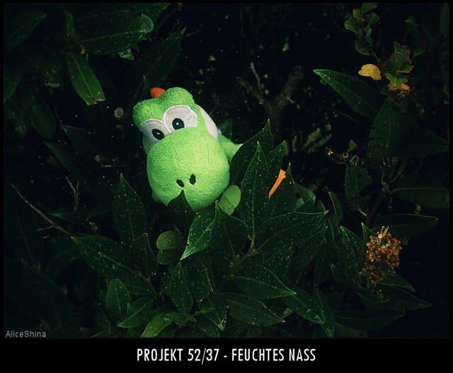 Projekt 52/37 - Feuchtes Nass