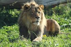 Hogle Zoo 9/13/14