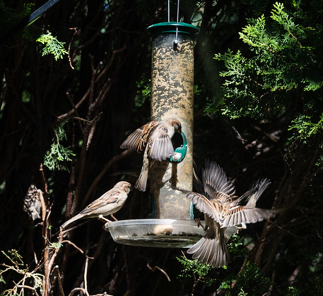 Busy Bird Feeder