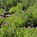 Castle Crest Wildflower Garden