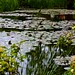 Monet's Water lily garden ©David McSpadden
