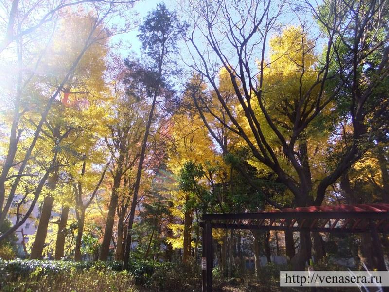 Парк за токийской мэрией