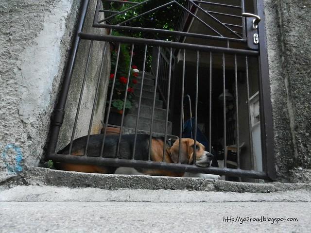 Пес и улица