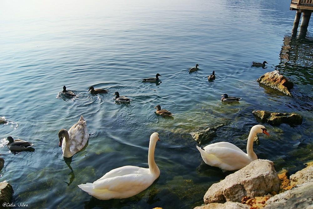 Italia Lago Di Garda (11)