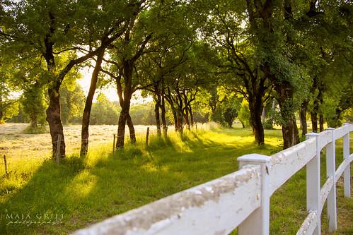 trees sunset summer sunlight nature beautiful grass fence landscape photography sundown