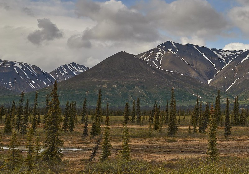 Tundra - Denali National Park
