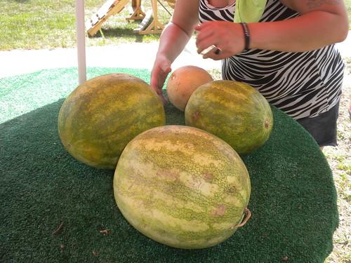 summer sc fruit stand berry skin north watermelon carolina produce roadside melon sell cucurbit citrullus pericarp hesperidium