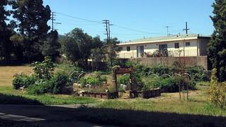El Cerrito Community Garden
